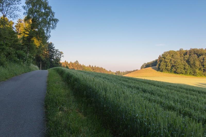 Bild Birchwil 3
